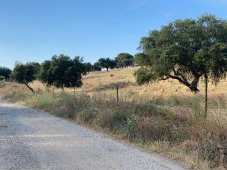 El Ayuntamiento de Coria ultima la instalación de la señalización de senderos de la localidad cauriense